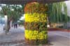 Flowered Pillar