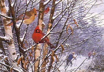 Cardinals in snowy tree